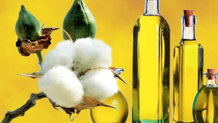 cottonseed oil massage